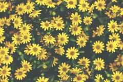 Summer flowers up close. Yellow colors. Bright yellow flowers in the summer Stock Images