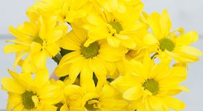 Bright yellow gerbera on wooden background. Flowers. Bright yellow gerbera on wooden background Stock Image