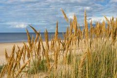 Bright yellow grass on the sandy beach Stock Image