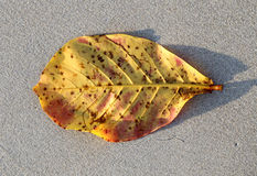 Bright yellow leaf Royalty Free Stock Photos