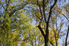 Bright yellow and orange autumn fall trees in a park. Foliage. Outdoors.  royalty free stock images
