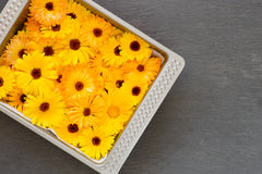 Bright Yellow Orange Flower Heads Pot Marigold Calendula Officin. Bright yellow orange flower heads pot marigold (Calendula officinalis) picked for drying Royalty Free Stock Photo