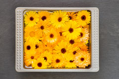 Bright Yellow Orange Flower Heads Pot Marigold Calendula Officin. Bright yellow orange flower heads pot marigold (Calendula officinalis) picked for drying Stock Photo
