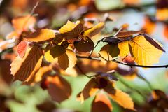 Yellow, orange, green autumn leaves on a blurred background. Bright yellow, orange, green autumn leaves on a blurred sky background royalty free stock image