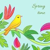 Bright yellow, orange little tropical forest bird Stock Photos