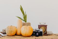 Bright yellow and orange pumpkins on light brown wooden table royalty free stock photography