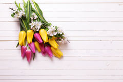 Bright yellow and pink spring tulips and apple tree flowers  on Royalty Free Stock Photos