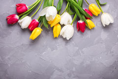 Bright yellow, pink  and white tulips flowers on grey textured c Stock Photo
