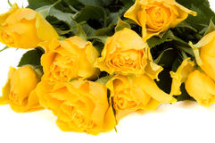 Bright yellow roses. Isolated on a white background royalty free stock images