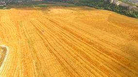 Bright Yellow Stubble Field At Picturesque Terrain stock video footage
