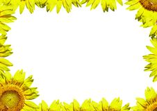 A bright yellow sunflower border. To use as a postcard or notepad Royalty Free Stock Photography