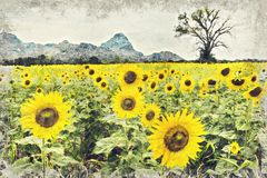 Bright yellow sunflower, Thailand. Digital Art Impasto Oil Paint royalty free stock image