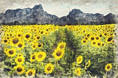 Bright yellow sunflower, Thailand. Digital Art Impasto Oil Paint. Ing Abstract vector illustration
