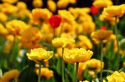 Spring blurred background stock images