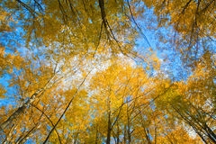 Bright yellow tree Stock Photos