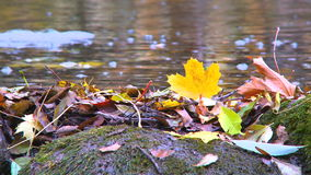 Bright yellow tree leaf with water in the background stock footage