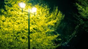 Bright yellow tree at at night at Lake Kawaguchi, Japan. Evening scene with a lamp and a bright yellow tree at Lake Kawaguchi, one of the scenic five lakes royalty free stock photos