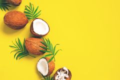 Bright yellow tropical background with coconuts royalty free stock images