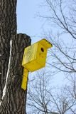 A bright yellow wooden birdhouse affixed to a tree trunk. In a sunny day Stock Image