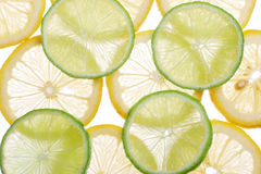Brighten citrus slices. On a white royalty free stock photos