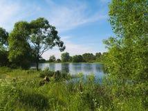 Brightful lata krajobraz z małym jeziorem Zdjęcia Royalty Free