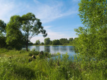 Brightful summer landscape with small lake. And many greens Royalty Free Stock Photos