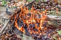 A brightly blazing fire in an autumn forest. Bonfire closeup Stock Photos