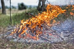 A brightly blazing fire in an autumn forest. Bonfire closeup Royalty Free Stock Image