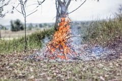 A brightly blazing fire in an autumn forest. Bonfire closeup Stock Photo