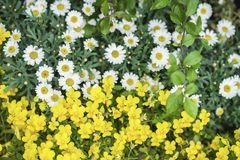 Brightly blooming summer flowers on lawn or meadow. Seasonal background for different topics. Brightly blooming summer flowers on lawn or meadow. Seasonal stock photography