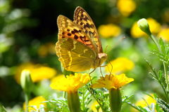 Brightly butterfly Royalty Free Stock Photo