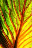 Brightly colored abstract leaf Stock Photos