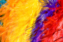 Brightly colored feathers. Close up of Brightly colored feathers Stock Image