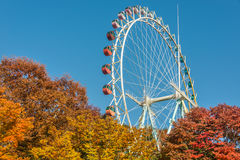 Brightly colored Ferris wheel against the blue sky and fall Royalty Free Stock Photo