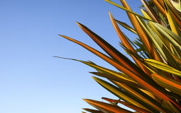 Brightly colored flax against blue sky. Royalty Free Stock Image