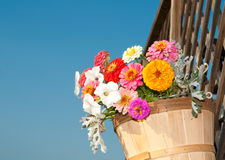 Brightly colored flowers in a wooden bucket agains Royalty Free Stock Photo