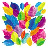 Brightly colored leaves Stock Images