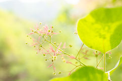 Brightly-colored leaves and Flower Royalty Free Stock Photo
