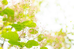Brightly-colored leaves and Flower Stock Image