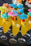 Cocktails with umbrellas at a spring festival corporate event. Brightly colored orange flavored cocktail drinks with cherry  garnish on a waiters tray Stock Photography