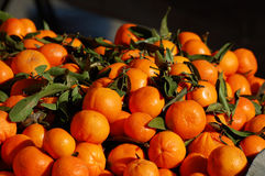 Brightly colored oranges in California. Royalty Free Stock Photography