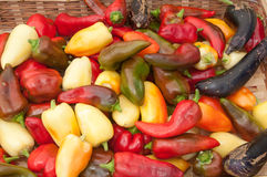 Brightly colored peppers Royalty Free Stock Photos