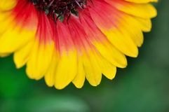 Brightly colored petals Royalty Free Stock Photo