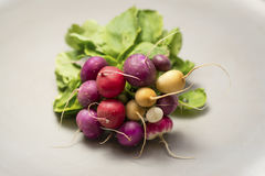 Brightly colored radishes on plate Royalty Free Stock Photo