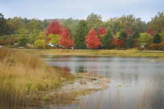 Brightly colored trees next to the lake at Morton Arboretum. Royalty Free Stock Photo