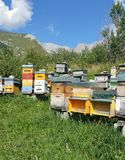 Brightly coloured beehives in pastoral setting. Cluster of brightly coloured beehives grouped together in alpine scenery surrounded by mountains under blue sky royalty free stock image