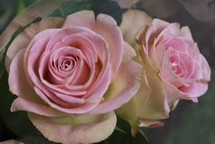 Brightly coloured pink rose flowers. Bright rose flowers in a bunch or bouquet in a florist, delicate pink roses Stock Photography