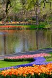 Brightly coloured tulips on display by the lake at Keukenhof Gardens, Lisse, South Holland. Brightly coloured tulips on display at Keukenhof Gardens, Lisse royalty free stock image