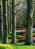 Brightly coloured tulips at Keukenhof Gardens, Lisse, South Holland royalty free stock photos