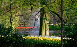 Brightly coloured tulips next to the water at Keukenhof Gardens, Lisse, South Holland. Brightly coloured tulips on display by the lake at Keukenhof Gardens royalty free stock photography